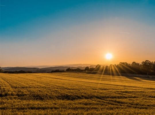 夕日と畑の写真
