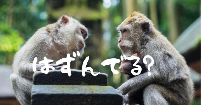 サルの家族の写真