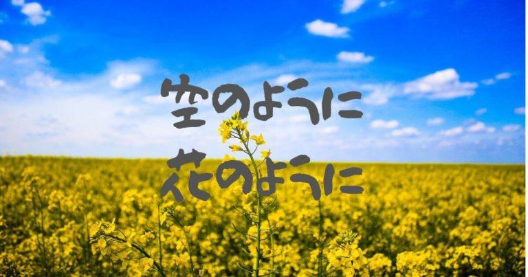 菜の花と青空の写真