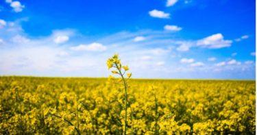 田舎暮らしに興味がるならシュミレーション!とある一日で田舎暮らしを疑似体験