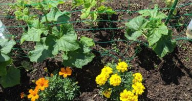 家庭菜園で年間50品目育てる方法|混植栽培のおすすめ