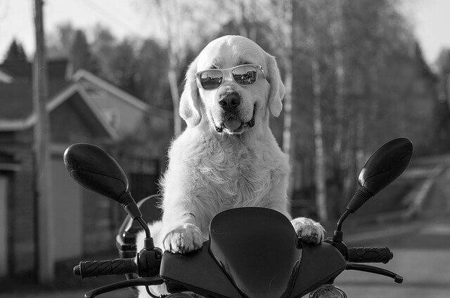 犬がバイクの上に載っている写真
