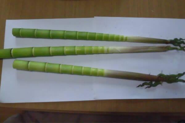 淡竹の皮を剥いた写真