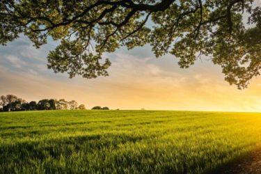 初心者のための畑の雑草対策!梅雨に入るまでが勝負です。
