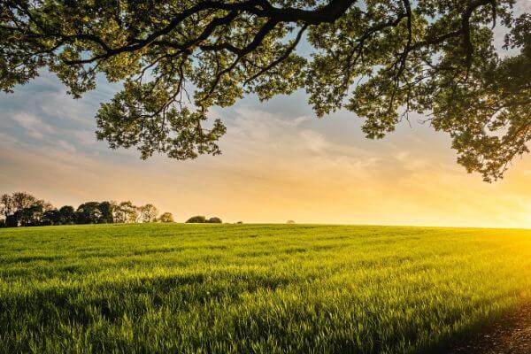 夕暮れの畑の写真