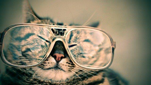 眼鏡をかけた猫の写真