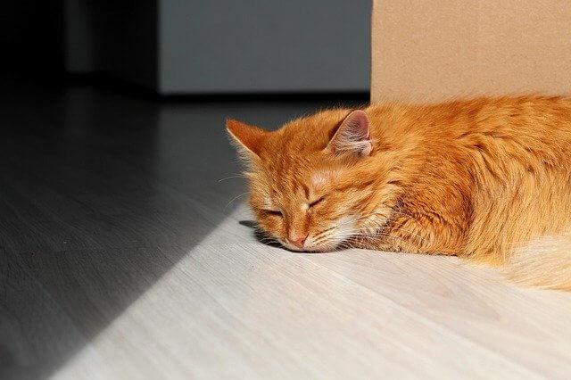 のんびりしている猫の写真