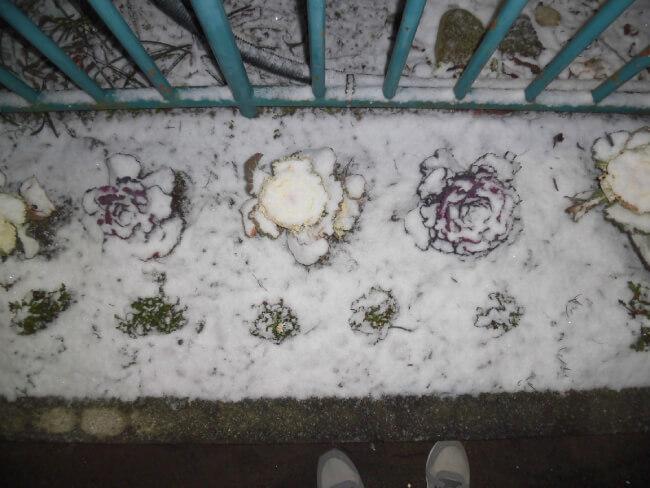 雪の歩道の写真
