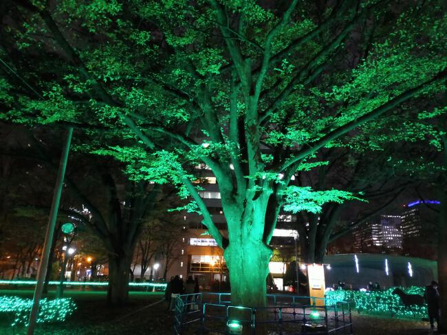 木のライテイング