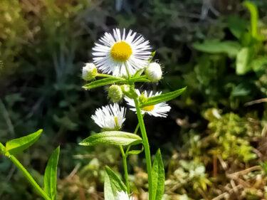 雑草の写真